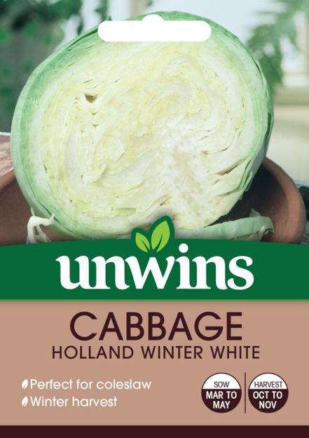 Picture of Unwins Cabbage Holland Winter White