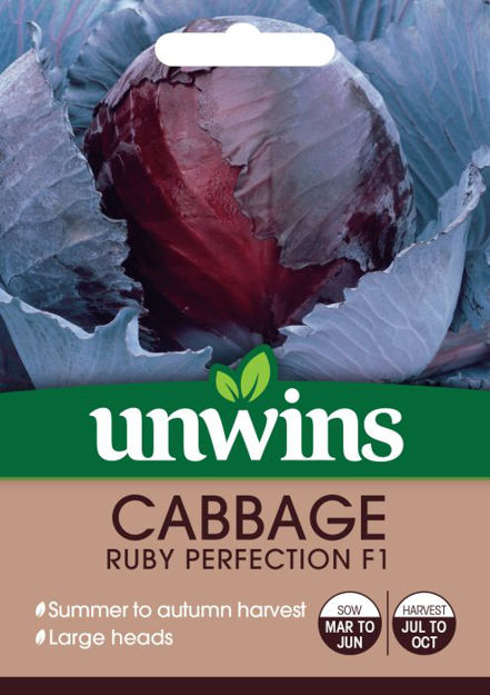 Picture of Unwins Cabbage Ruby Perfection F1