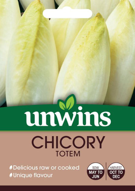 Picture of Unwins Chicory Toem