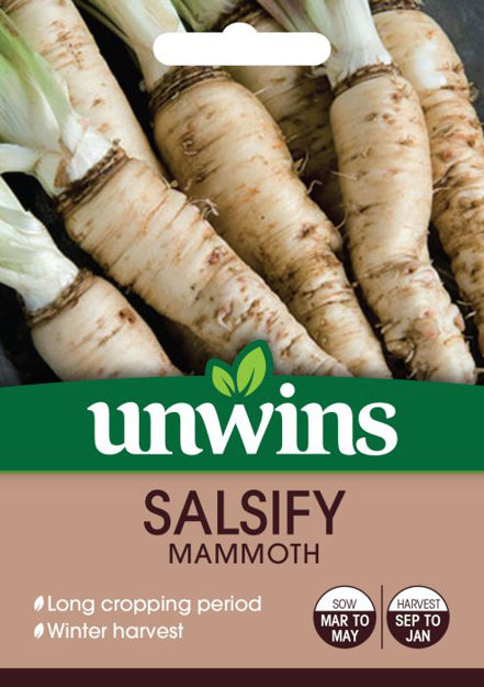 Picture of Unwins Salsify Mammoth