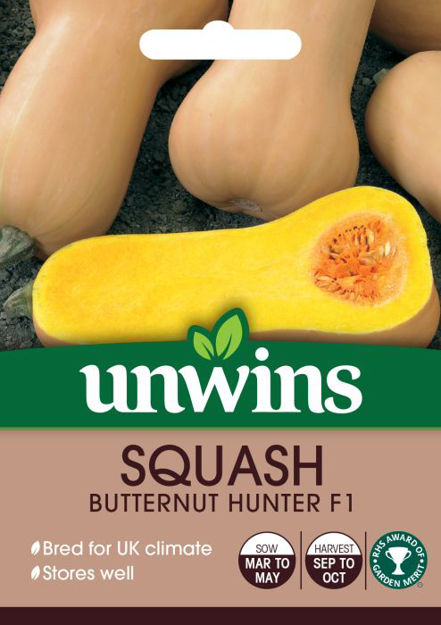 Picture of Unwins Squash Butternut Harrier F1 Seed