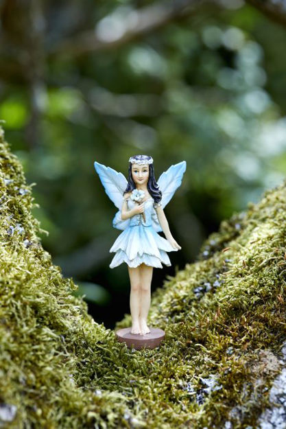 Picture of Forest Fairies
