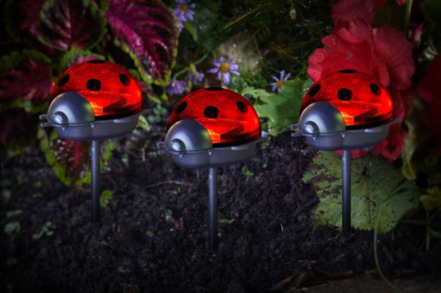 Picture of Ladybirds Triple Pack