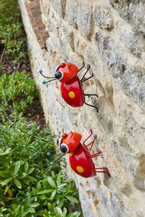 Picture of Large Loony Ladybug