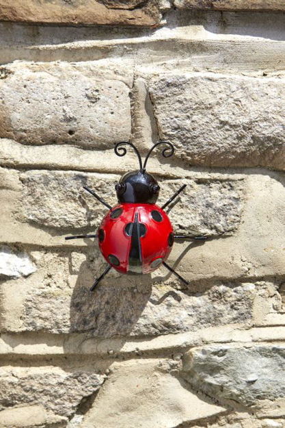 Picture of Large Ladybird