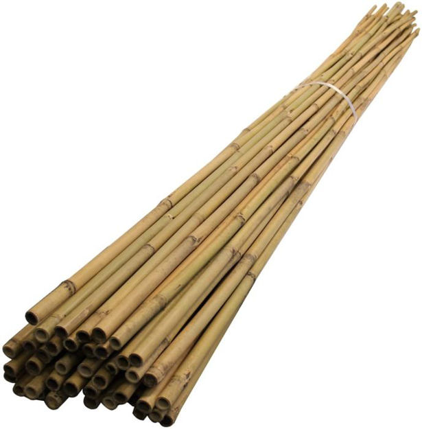 Picture of Smc4 Bamboo Canes 4' (10s)
