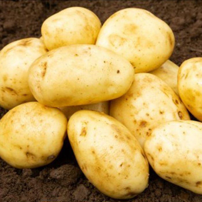 Picture of Dp054 2kg Maris Piper Main Crop Potatoes