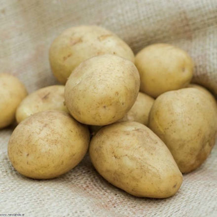 Picture of Dp001 2kg Homeguard Earlies Potatoes