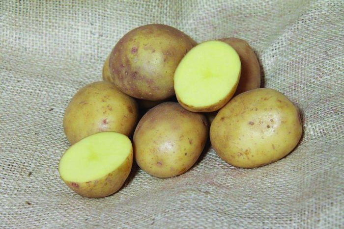 Picture of Dp027 2.5kg Colleen Potatoes First Earlies
