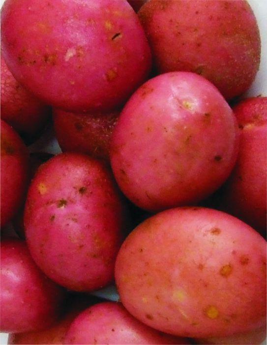 Picture of Dp019 2kg Rooster Potatoes Main Crop