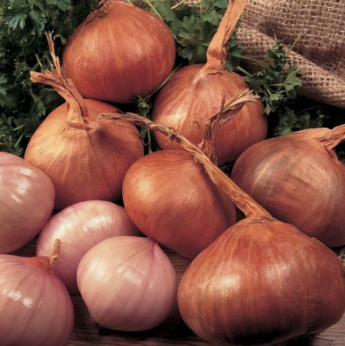 Picture of Mos007 500gm Shallots Red Sun 7/15cm