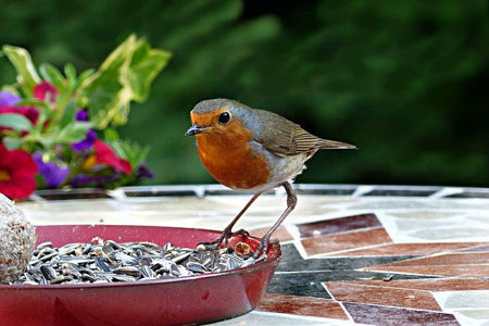Picture for category Autumn Wild Bird Care