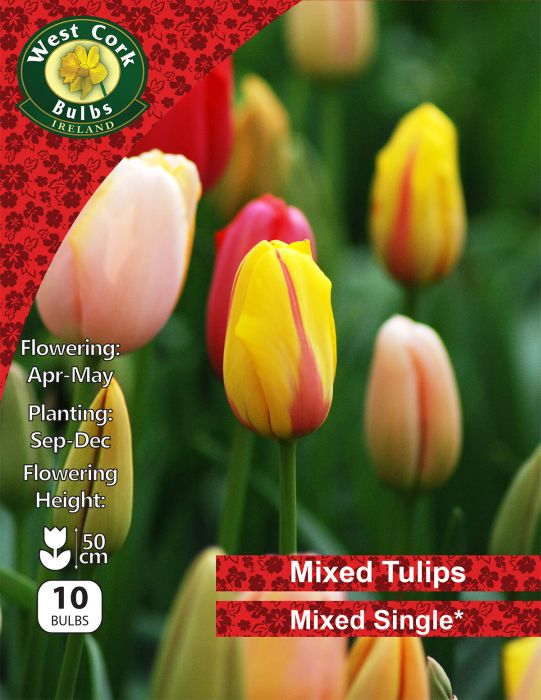 Picture of Tulips Single Mixed 10 Bulbs 11-12