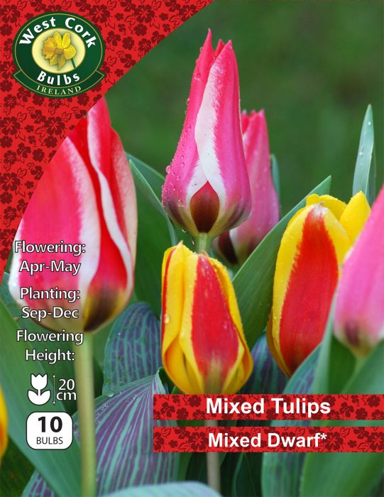 Picture of Mixed Dwarf Tulips 10 Bulbs