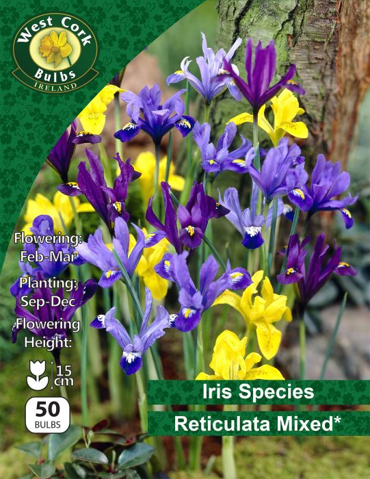 Picture of Iris Reticulata Mixed 50 Bulbs