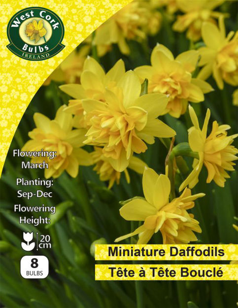 Picture of Daffodil Tete A Tete Boucle 10 Bulbs Packk 10/11