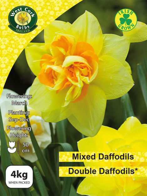 Picture of Mixed Double Daffodils 4kg Net 12/14