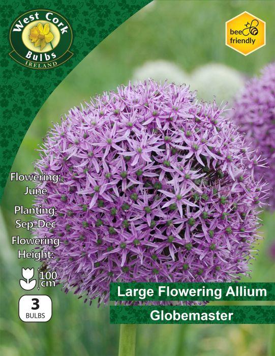 Picture of Large Allium Globemaster 3 Bulbs Prepack