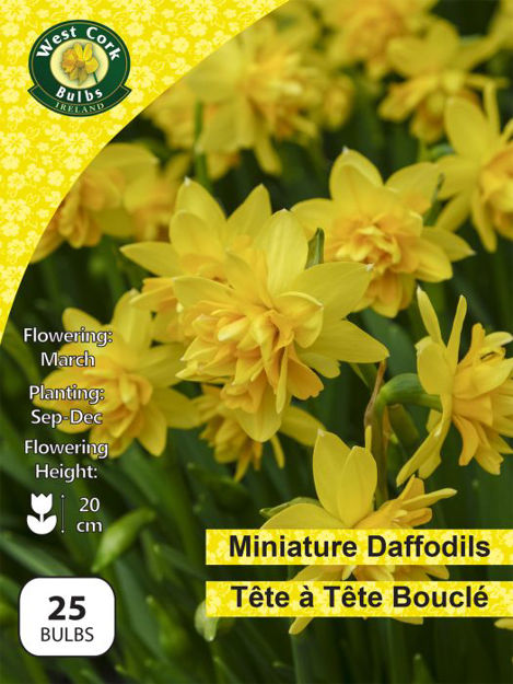 Picture of Daffodil Tete A Tete Boucle 25 Bulbs Pack 10/11