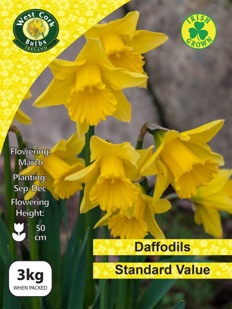 Picture of 3kg Standard Value Daffodils Net