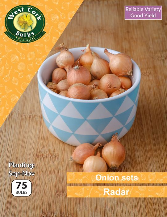 Picture of Onion Sets Radar 75 Bulbs
