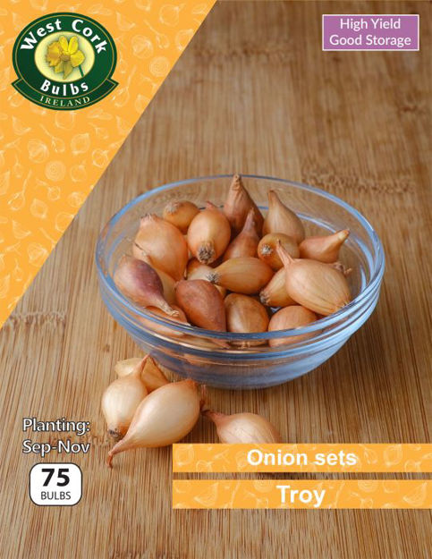 Picture of Onions Sets Troy 75 Bulbs