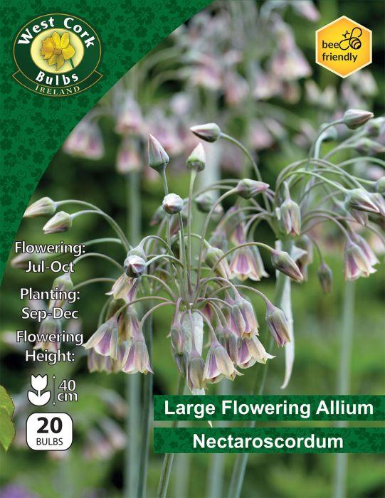Picture of Large Allium Nectaroscordum 20 Bulbs