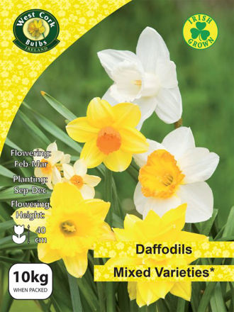 Picture of 10kg Mixed Daffodils Net 12/14