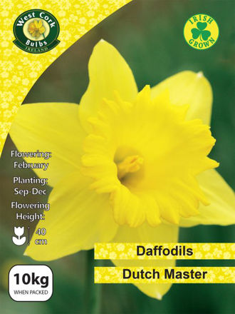 Picture of 10kg Dutch Master Daffodils