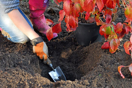 Picture for category Autumn Planting