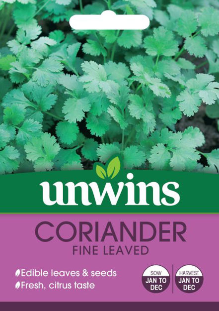 Picture of Unwins Herb Coriander Fine Leaved