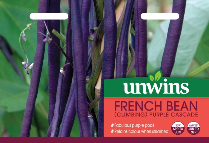 Picture of Unwins French Bean Climbing Purple Cascade