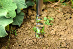Picture of Stainless Steel Hand Corkscrew Weeder