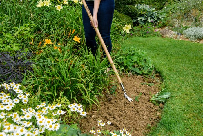 Picture of Stainless Steel Long Daisy Weeder