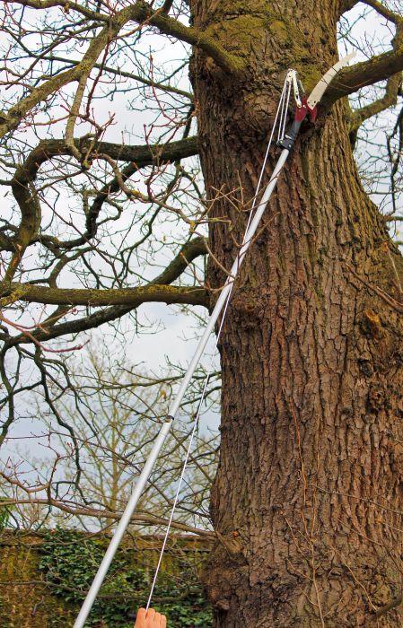 Picture of Telescopic Tree Lopper 3m