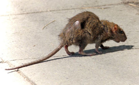 Picture for category Vermin & Pest Protection