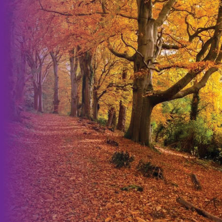 Picture for category Outdoor Jobs for Autumn